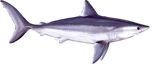 Portland Maine Shark Charters